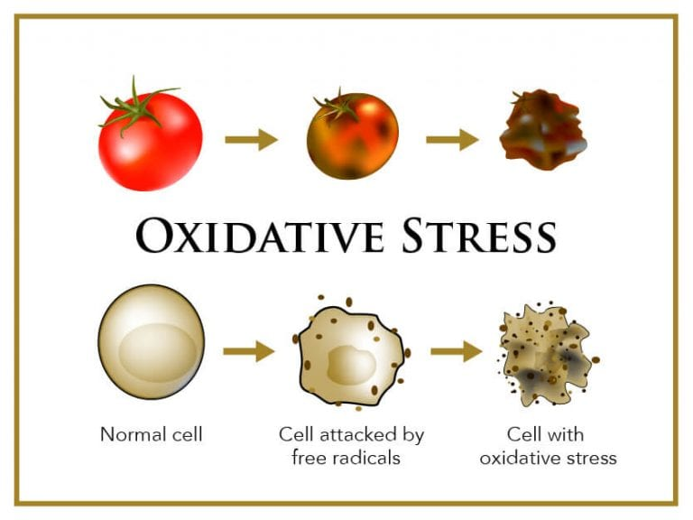 Free-Radicals-oxidative-stress